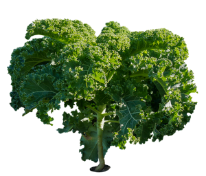 Why you should eat more Kale