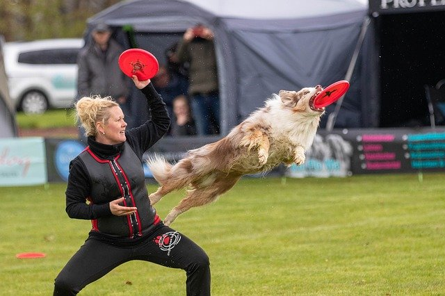 Exciting Exercises To Try With Your Dog This Fall